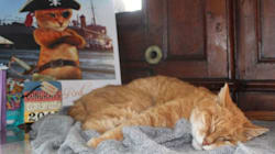 Cat Who Caught Mice On Halifax Ship Gets Retirement