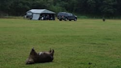 Another Wombat Killed At Kangaroo Valley Campground Near Site Of Previous