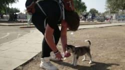 Dalla Siria con il suo husky: