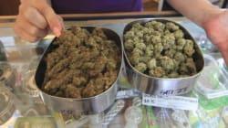 Du THC sans cannabis... grâce à des