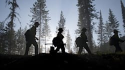 550 Flee British Columbia Forest