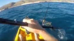 Il se bat contre un requin-marteau en pleine