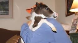 Ces chevaux miniatures sont parfaits pour aider les