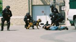 Edmonton's Maverick Wins Canadian Police Dog