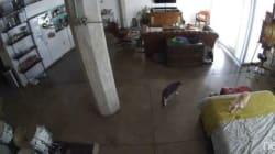 「おだまり」吠える子犬を猫のお姉さんが一喝で黙らせる【動画】