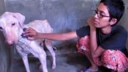 L'émouvante transformation d'un chien abandonné sauvé par un
