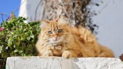 マルタ島の猫たちは、地中海の楽園をのんびり散歩(画像集)