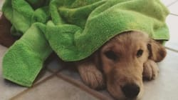 This Puppy Gives Himself A Bath And Towels Off Every