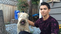 Teen Stabs Bear With Kitchen Knife To Save Family Dog In