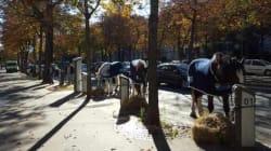 Des chevaux aux bornes Autolib dans le 16e arrondissement de