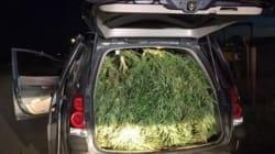 Cops Nab Minivan Stuffed With
