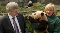Conservatives Vow To Double Canada's Panda