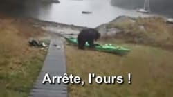 Les internautes auraient préféré que l'ours dévore cette