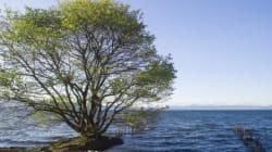 琵琶湖の水と生物は、潜水ロボット「たんたん」が見守っていた