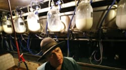 Ontario Raw Milk Farm Raided By Public Health