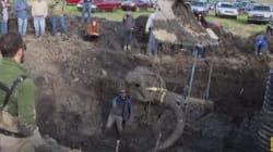 Un squelette quasi-complet de Mammouth découvert aux
