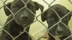 SPCA Seizes Dozens Of Dogs Found Living In Own