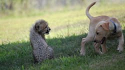 Cheetah Cub And Puppy Form Ultimate Cute BFF
