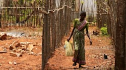 Sri Lanka Red Cross Investigates Claim of Sex-For-Aid Demand In Former War