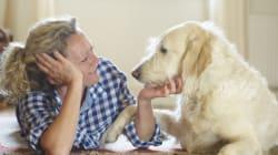 12 leçons tirées de la vie avec un chien à la