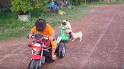 Ce petit chien veut vraiment faire de la moto avec ses