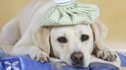 Curare il cane è diventato un lusso. I farmaci costano