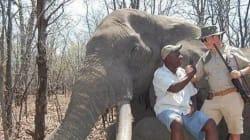 La chasse de l'éléphant abattu par un touriste au Zimbabwe était