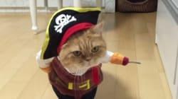 Ce chat fera un parfait pirate pour Halloween