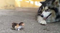 「どうしていいかわからんワン」子猫に戸惑うわんこが愛らしい