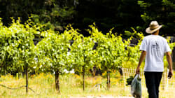 Farm To Table, Meet Vine To