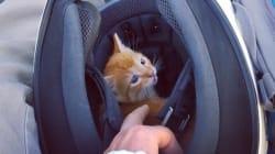 Ce chat chanceux a été secouru en plein trafic