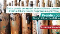 #sporchemabuone, 80mila bottiglie di vino recuperate dal