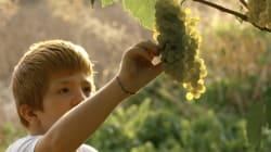 Pour protéger nos enfants, il faut traiter en bio toutes les zones agricoles près des