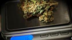 Marijuana, Trudeau et loi : le guide pour tout