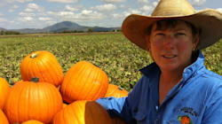 Farmers Carve A Niche In Jack-O-Lantern Pumpkin