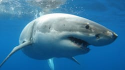 Drones To Patrol NSW Beaches For Sharks, Govt