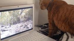 猫はリスを追いかける「どこに行ったニャ!」
