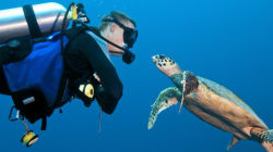 You Could Be Diving In A Marine Reserve By The Week's