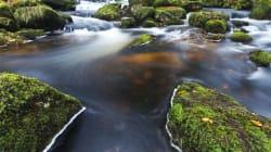 生物多様性の喪失が生態系の安定性を脅かす