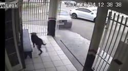 Ce chien l'a échappé