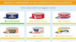 Le 11 scatolette di tonno più sostenibili secondo