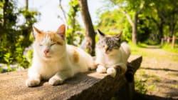 Il tuo gatto è aggressivo? Potrebbe dipendere dal colore del suo