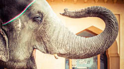 The Intrinsic Value Of Elephants Far Supersede Their Monetary