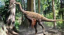 Découverte d'un squelette de dinosaure à