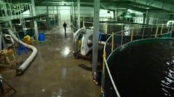 L'élevage de saumon... sur la terre