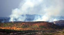 Incendies de forêt en Indonésie, l'huile de palme sous les feux de la