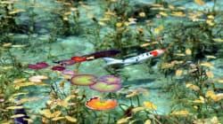 【モネの池】岐阜の名もなき池が、名画「睡蓮」そっくりの美しさ(画像・動画)