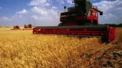 Importante diminution des fermes au