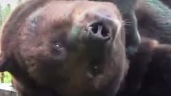 El oso pintor que triunfa en