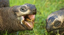 Wildlife Smugglers Arrested In UP With 35 Tortoise Of Rare